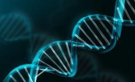 Старение с точки зрения генетики