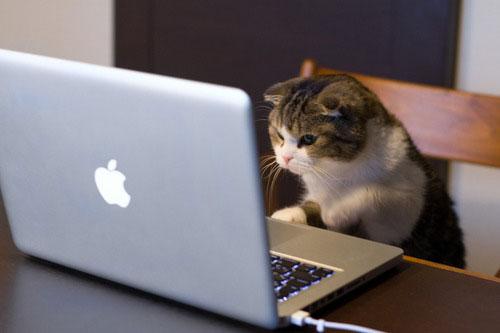 cat-w-mac